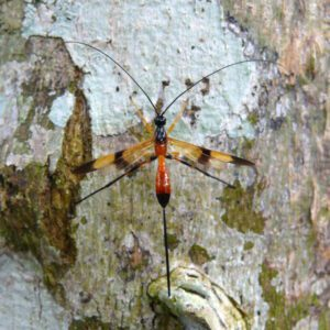 Other hymenopterous insects
