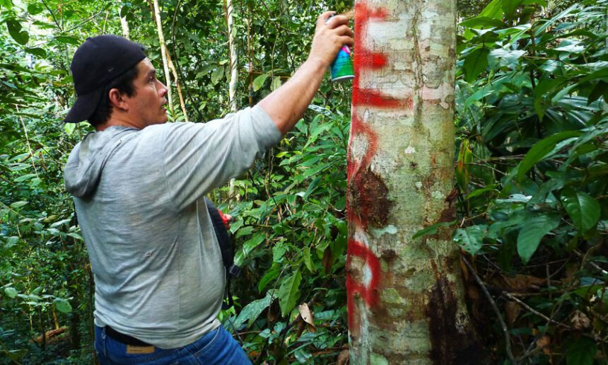 Hibraín Vásquez, the main caretaker's son, fixing a boundary marker on Panguana property