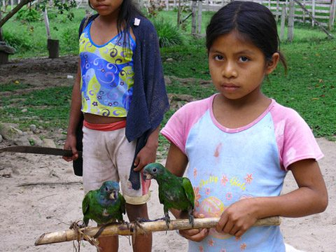 An Asháninka girl carrying a branch with two young Blue-headed Parrots (Pionus menstruus)